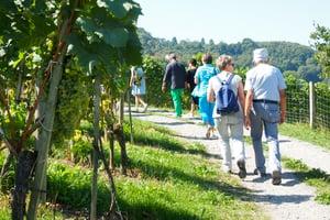 Arenenberg Weinwanderung Ausflug Schiffreise Gruppen Untersee
